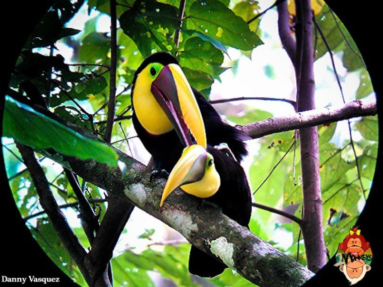 Two Monkeys Travel - Manuel Antonio - Costa Rica - Toucans