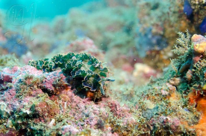 Two-Monkeys-Travel-Costa-Rica-Scuba-Diving-Lettuceslug