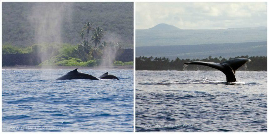 Two Monkeys Travel - Costa Rica - Scuba Diving - Whale Season