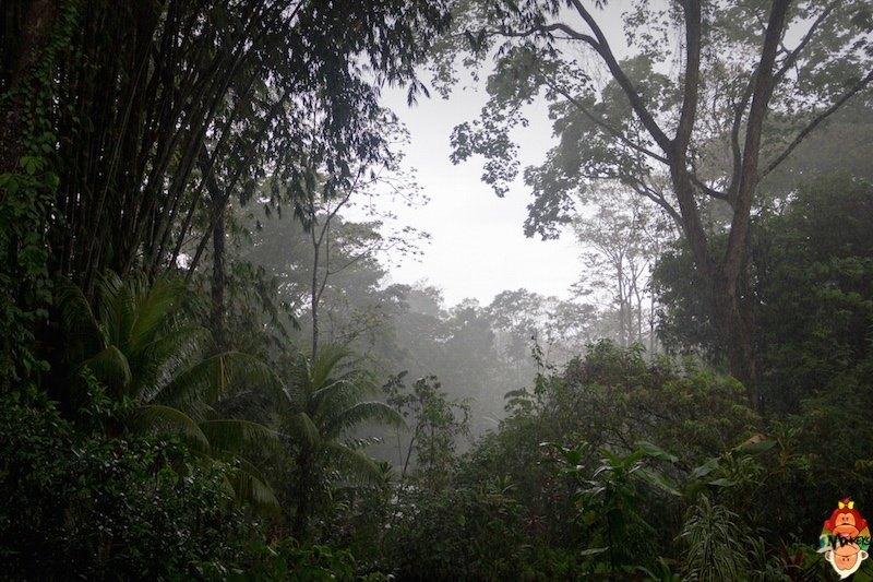 20_unvita_rain_forest
