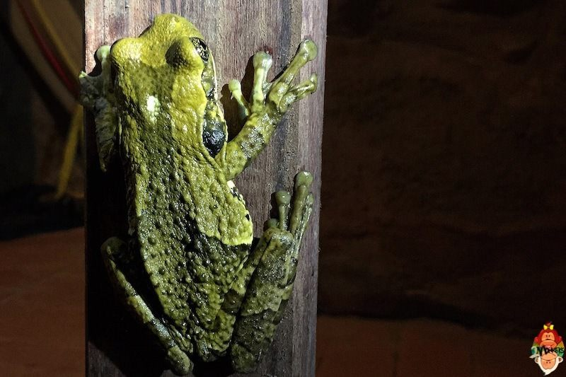 22_uvita_frog_in_hostel