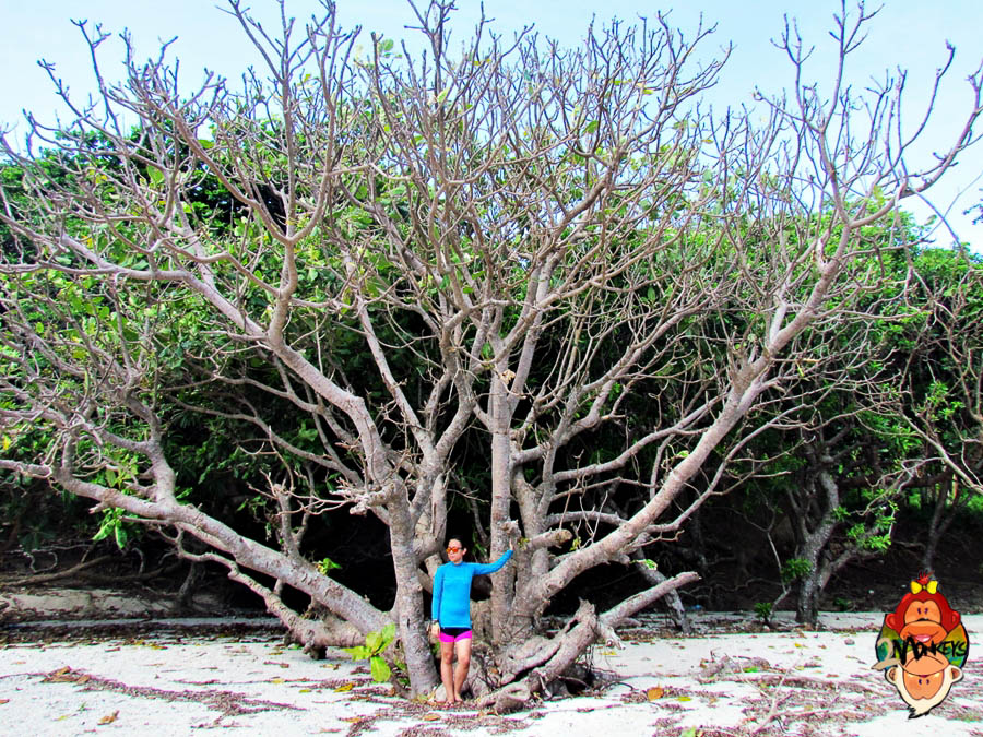 DIY Travel Guide Series-Tuguegarao and Palaui Island