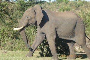 Things to do in Kenya East Africa 3
