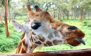 Things to do in Kenya East Africa