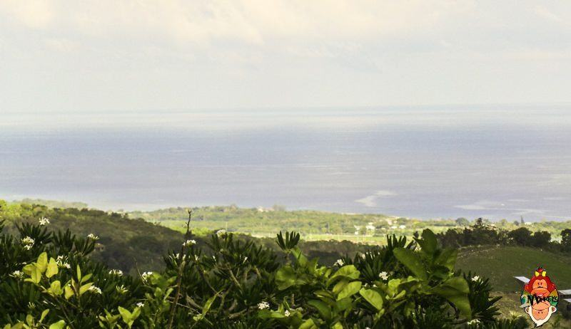 Sustainable Tourism and the Natural Wonders of Jamaica