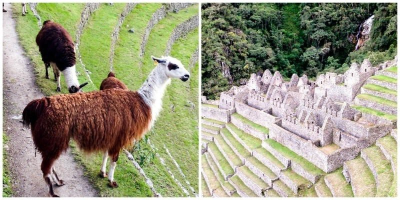 Two Monkeys Travel - Inca Trail - Machu Picchu - Peru - Sacred Valley-22