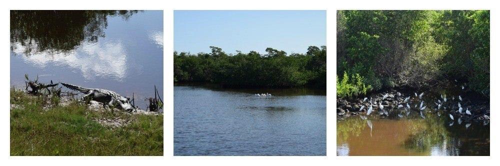 Two Monkeys Travel - USA - Florida 1