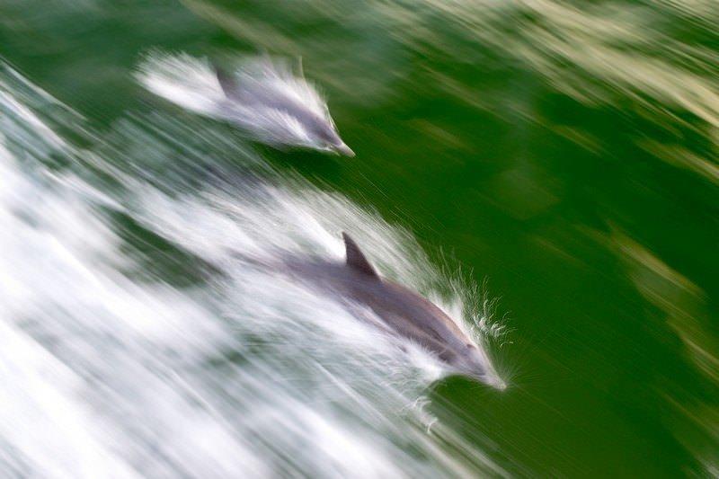 Two Monkeys Travel - USA - Florida - Fort Myers - Sanibel Island - Captiva Island 10