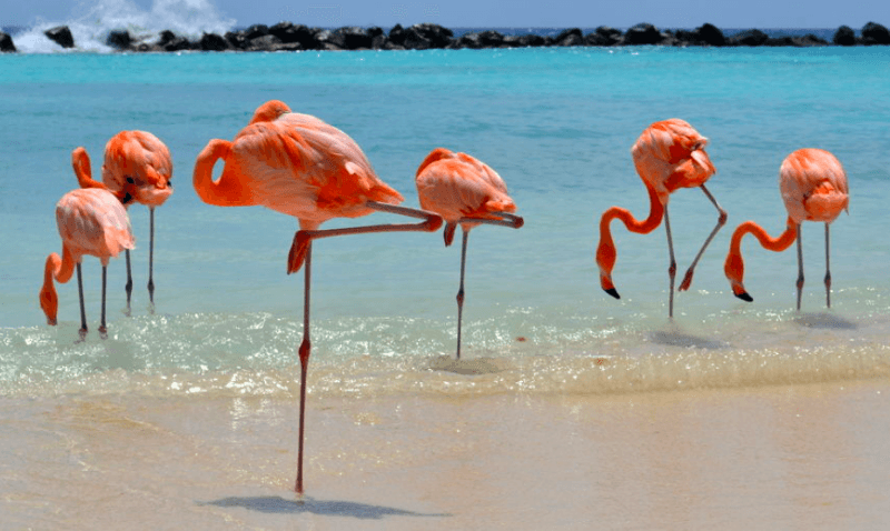 Best Luxury Hotels in Aruba 2