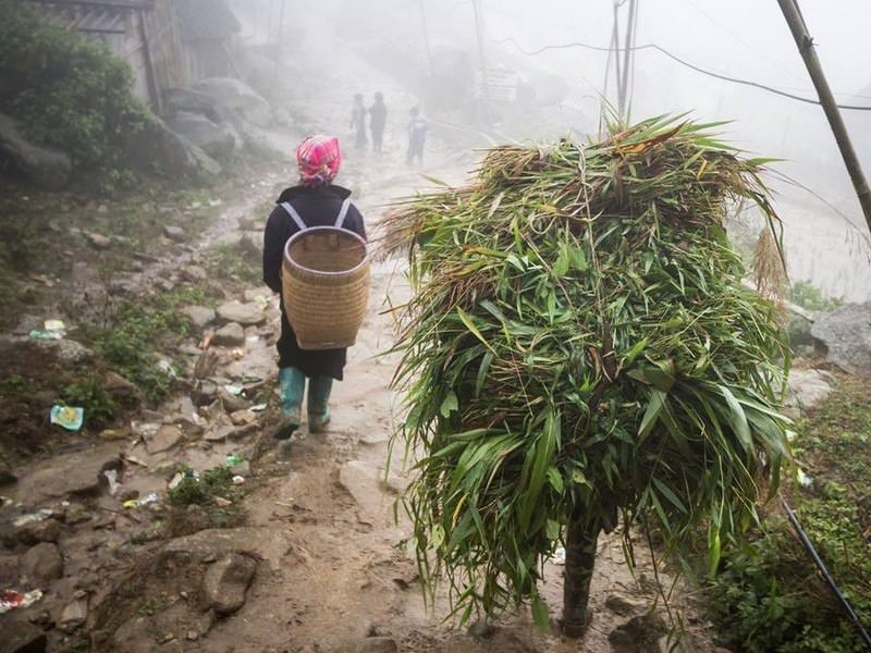 North Vietnam in Winter: Trekking and Homestay in Sapa