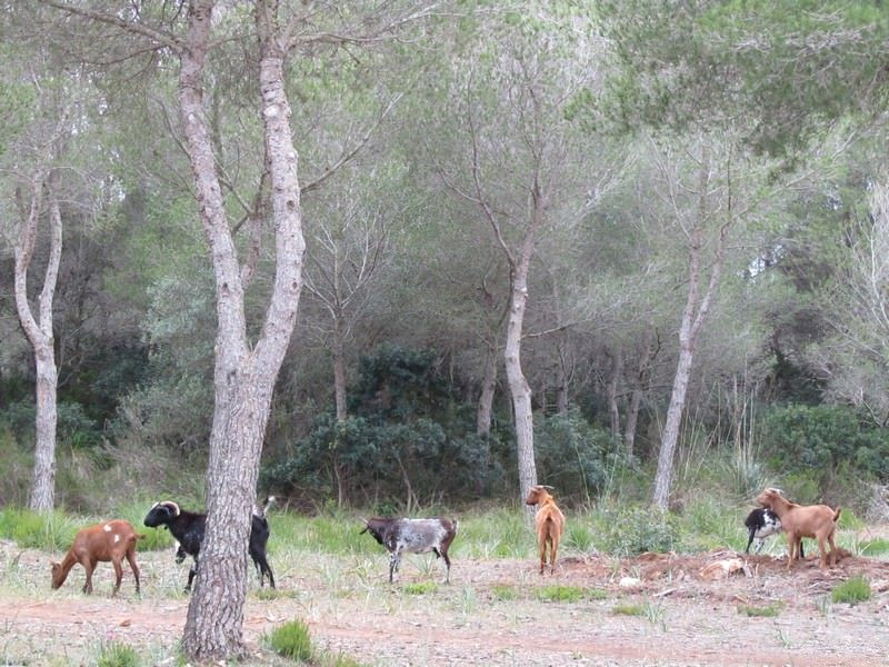 8-Two Monkeys Travel - Outdoor Activities in Menorca -