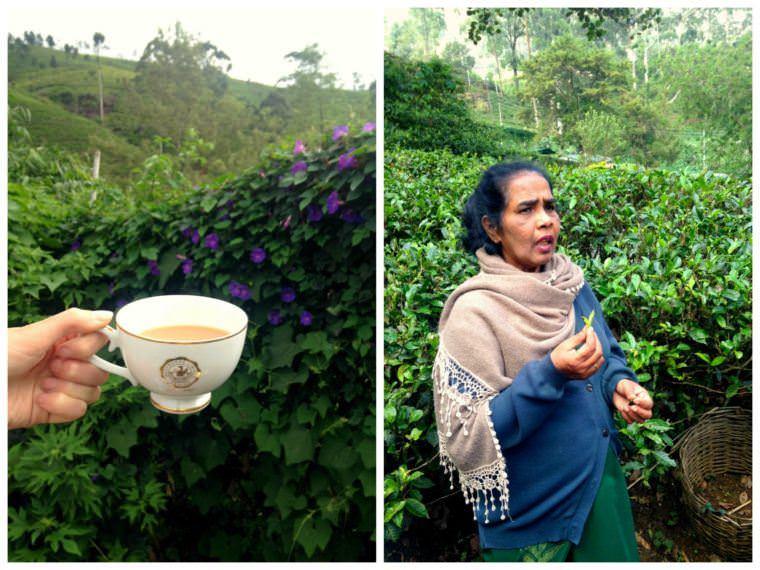 Central Sri Lanka Experiences - Tea Time at Mackwoods Plantation