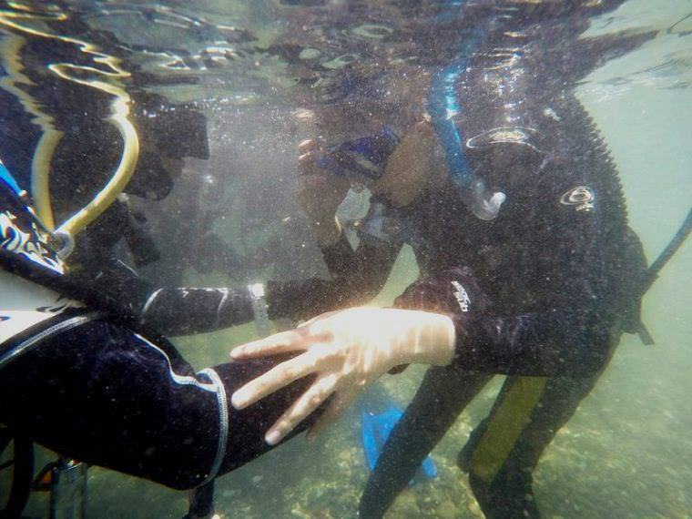 Intro to Diving: My First and Definitely Not Last Scuba Diving Experience