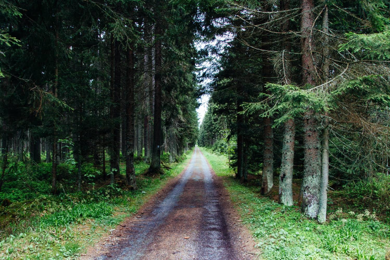 road-into-sumava-czech-republic