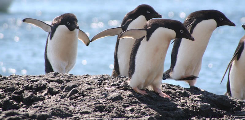 best antarctica cruise - Two Monkeys Travel - Antarctica Cruise - Hurtigruten - sustainable travel lifestyle - liligo