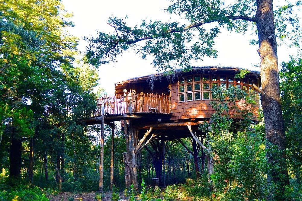 Best List of Hotels in Pucon, Chile - Tree Lodge Nidos de Pucon