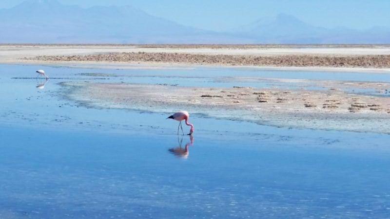 7 Awesome Things to Do in San Pedro de Atacama, Chile