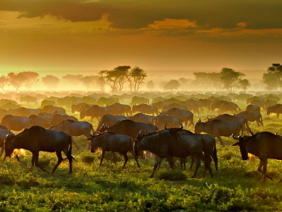 two monkeys travel - family travel - Vantage-Africa-2
