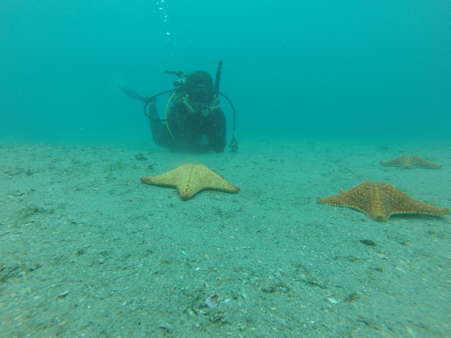 PADI Discovery Dive with Pura Vida Divers