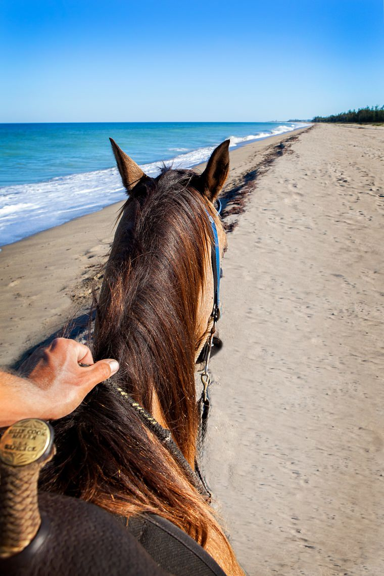 Horseback Riding on the Beach Port Saint Lucie