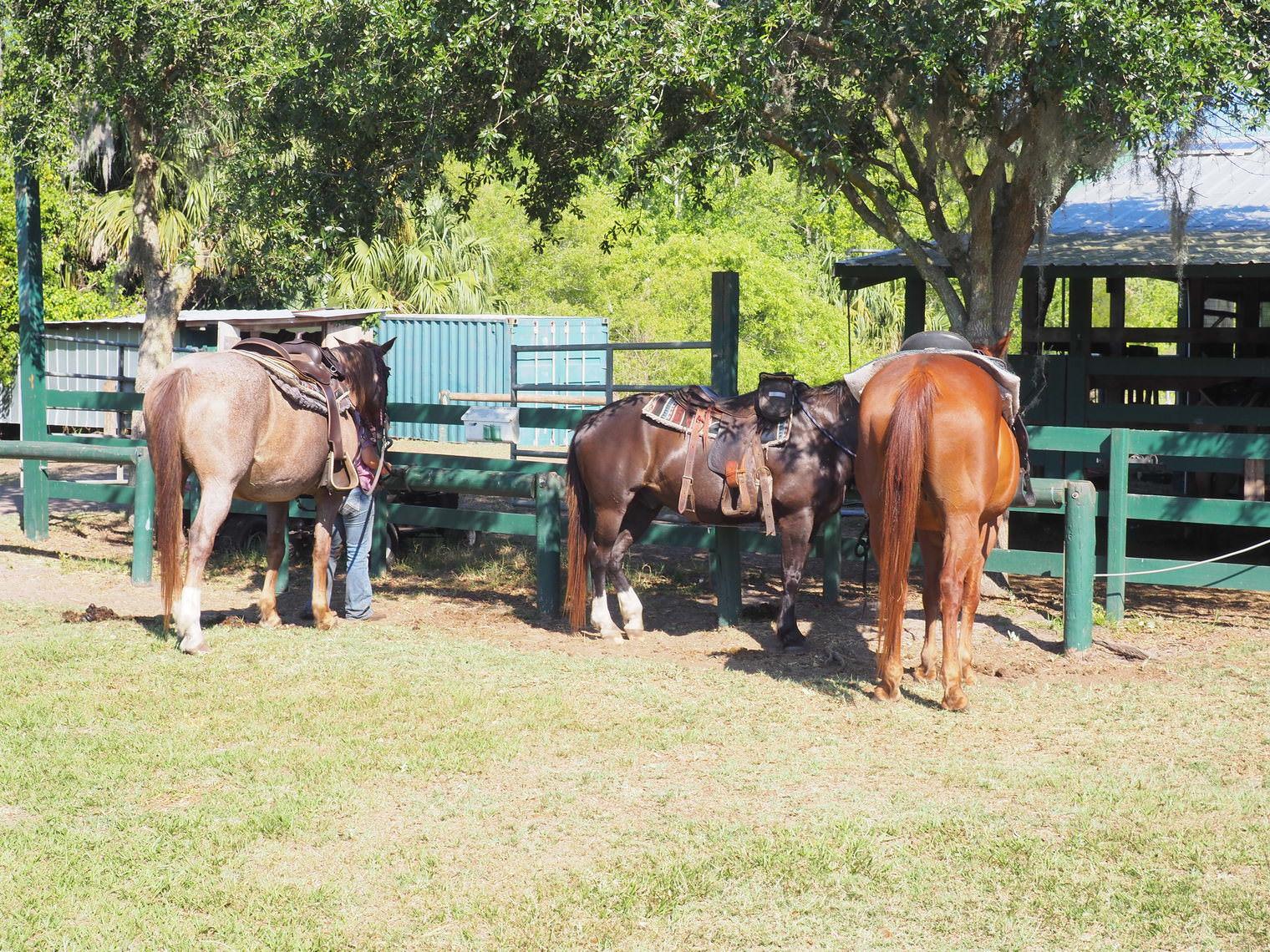kissimmee_horseback_riding_forever_florida (1)