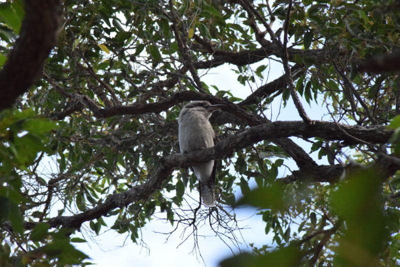 two monkeys travel - nullarbor - australia 5