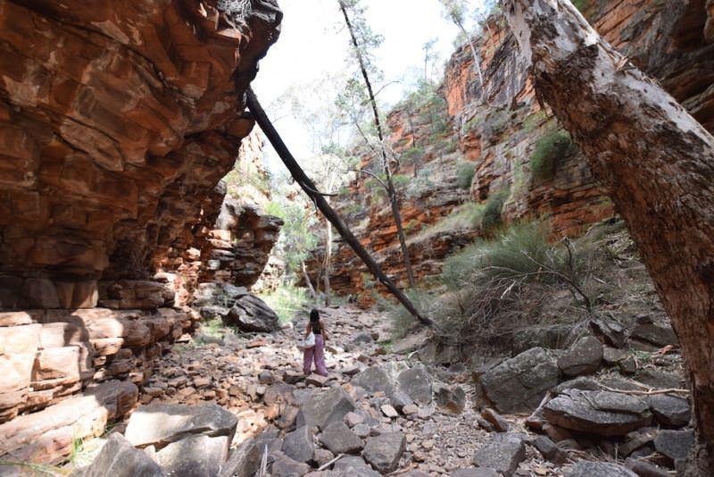 two monkeys travel - nullarbor - australia
