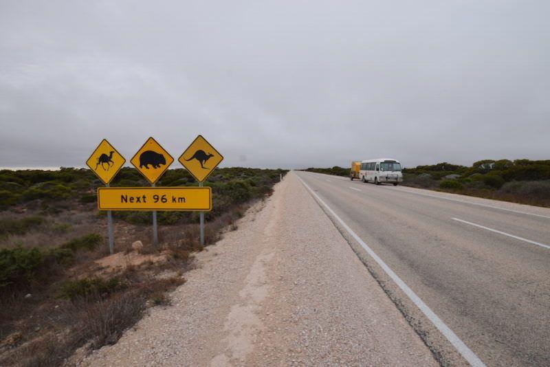 two monkeys travel - nullarbor traveller - australia 3