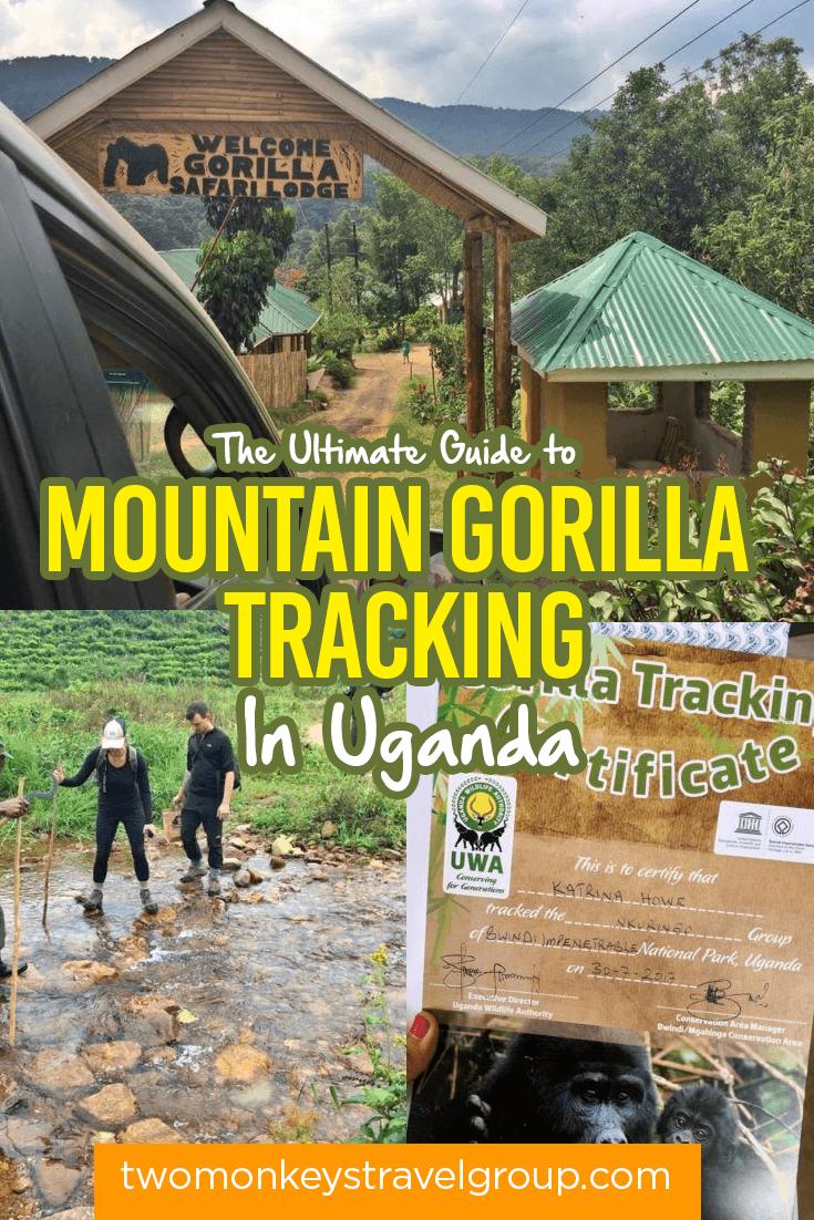 The Ultimate Guide To Mountain Gorilla Tracking In Uganda