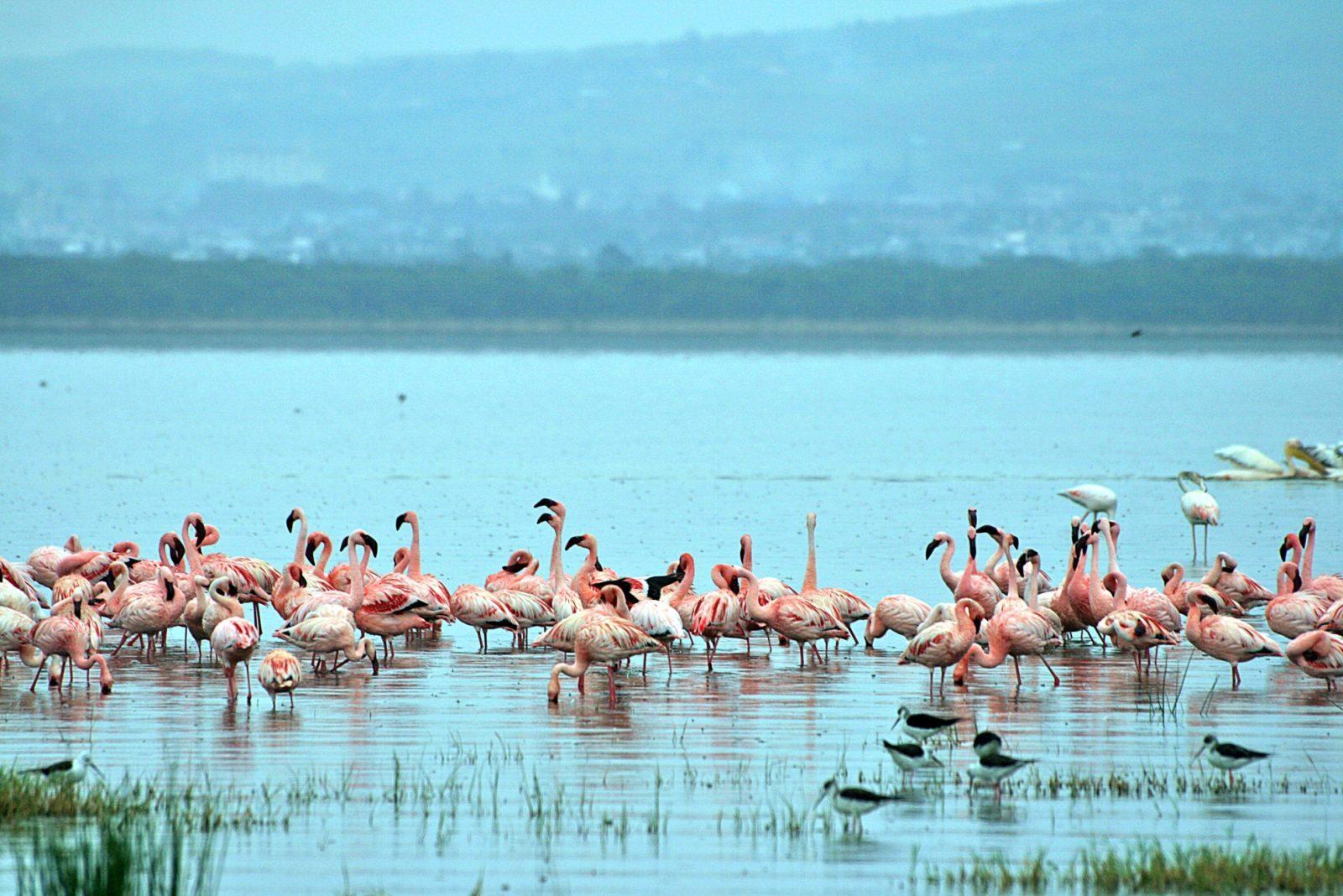 What to see and do in Lago Nakuru, Kenya