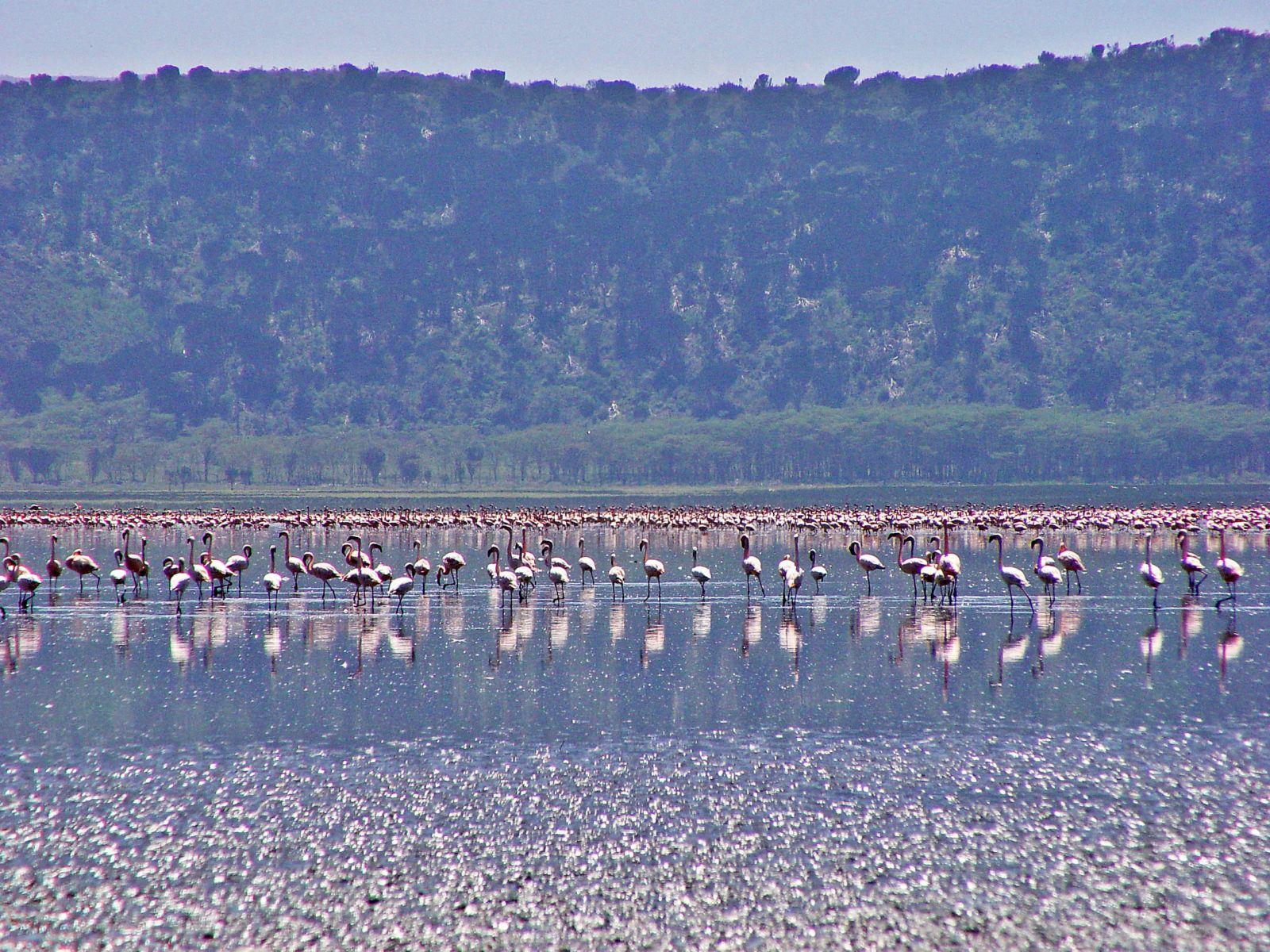 What to see and do in Lago Nakuru, Kenya1