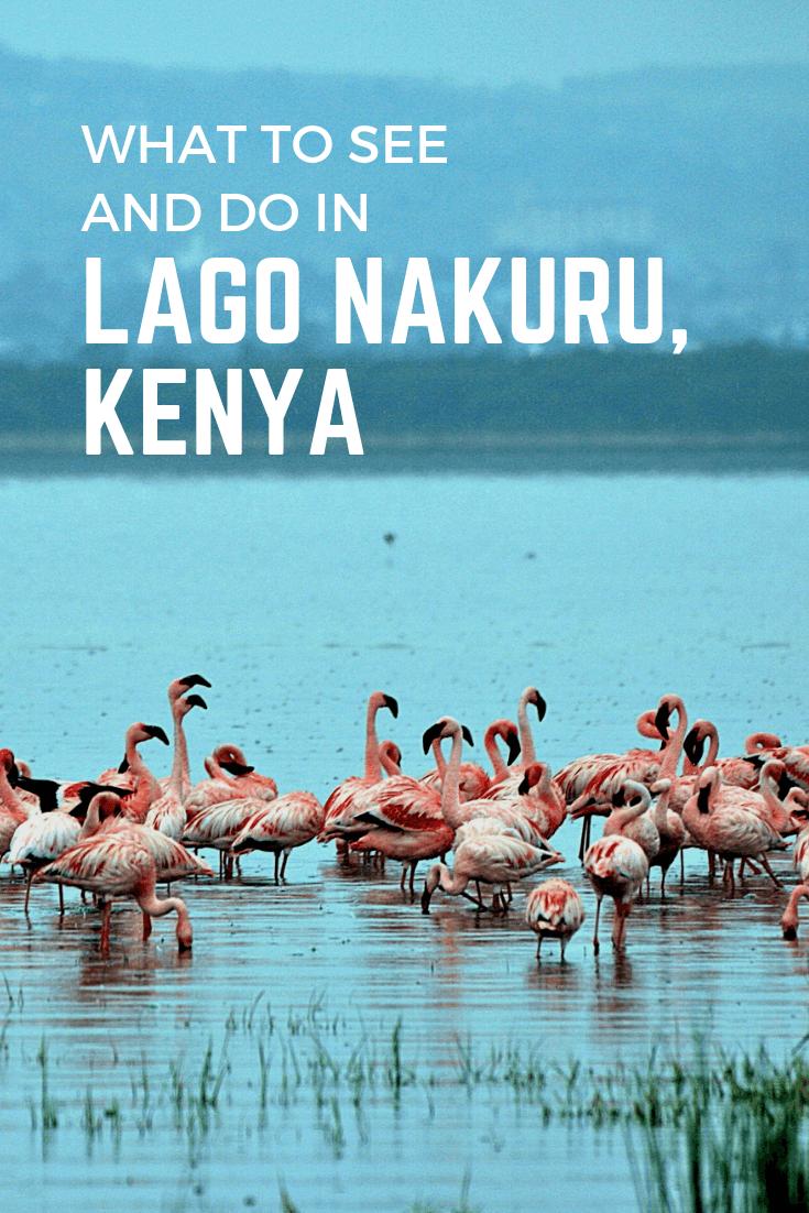 What to see and do in Lago Nakuru, Kenya2