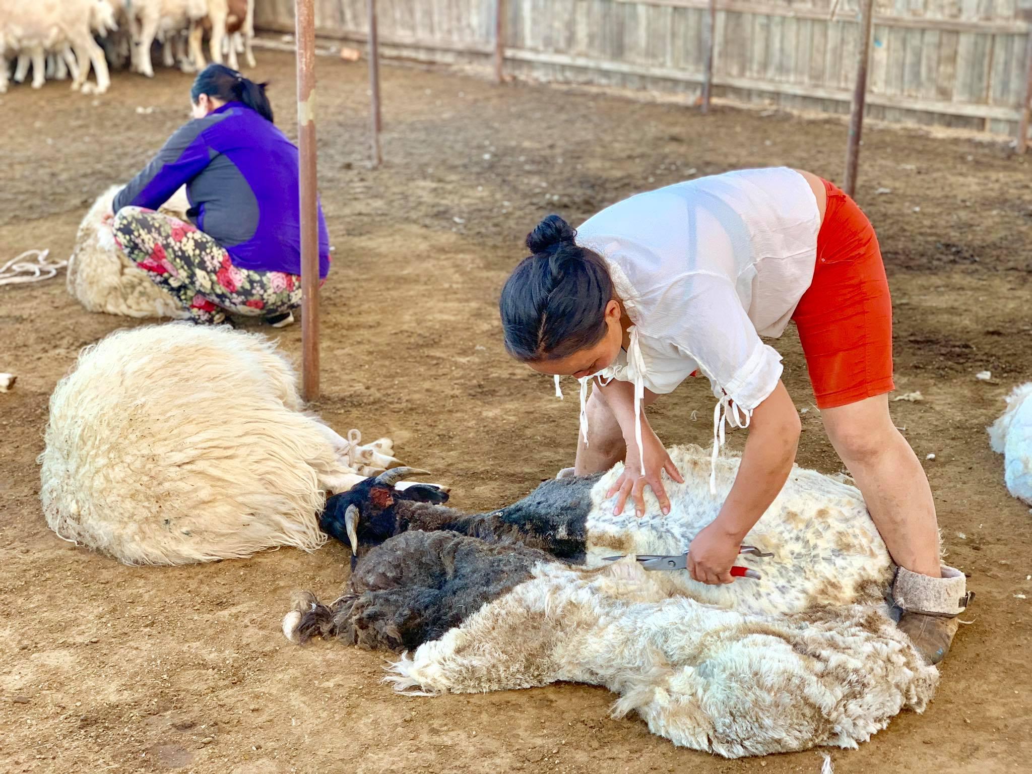 My Dream Trip To Mongolia1