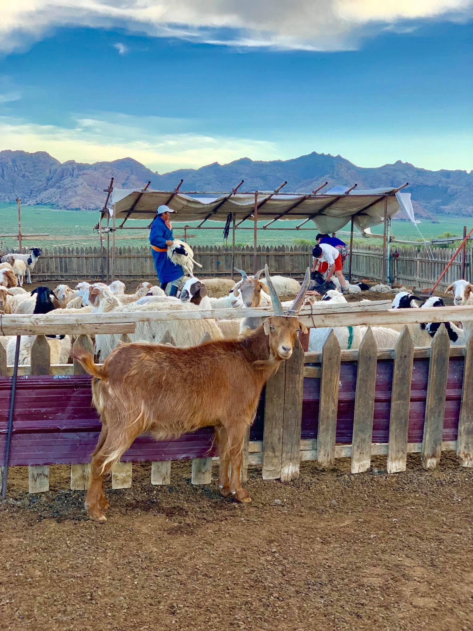 My Dream Trip To Mongolia4
