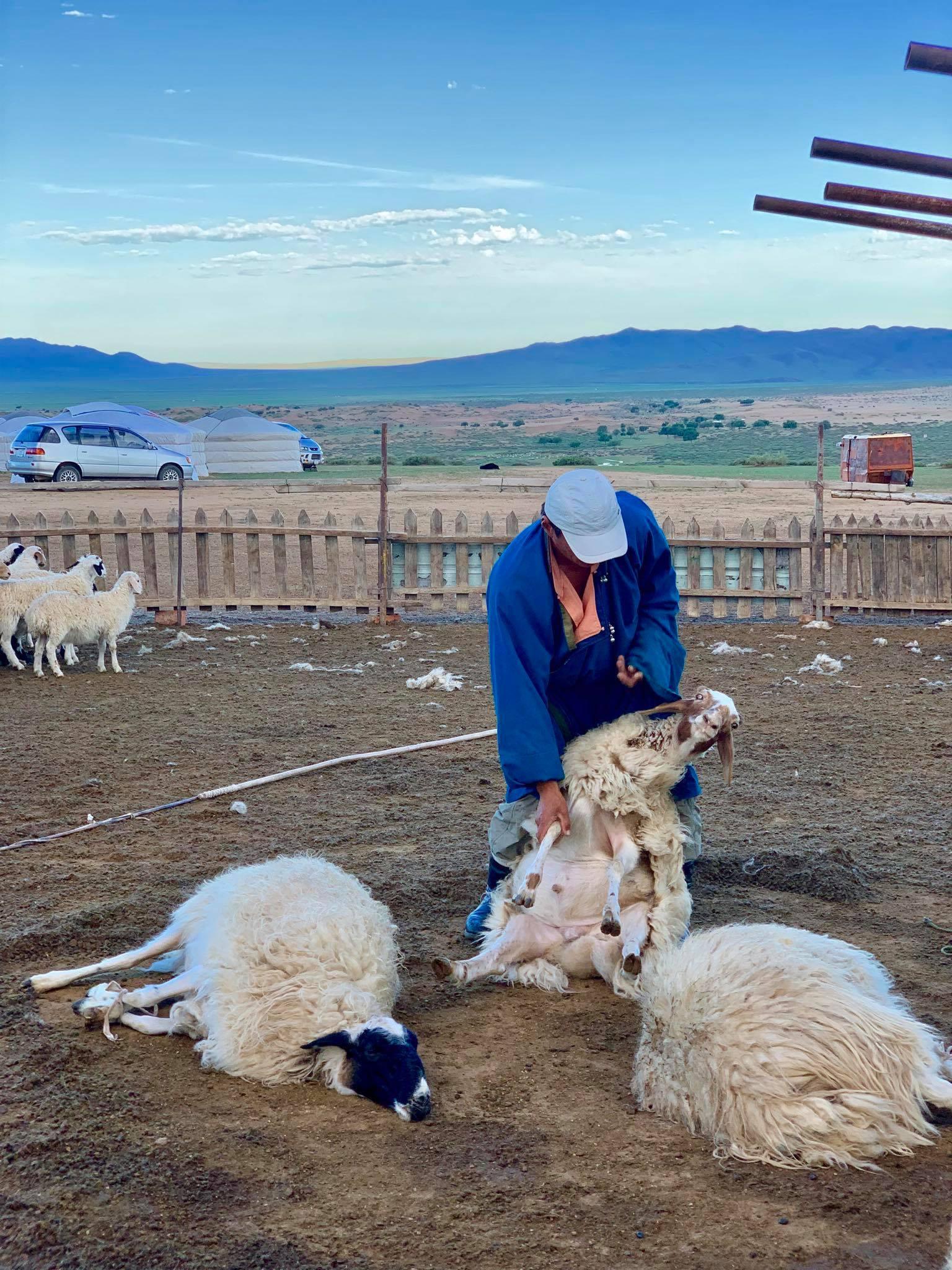 My Dream Trip To Mongolia6