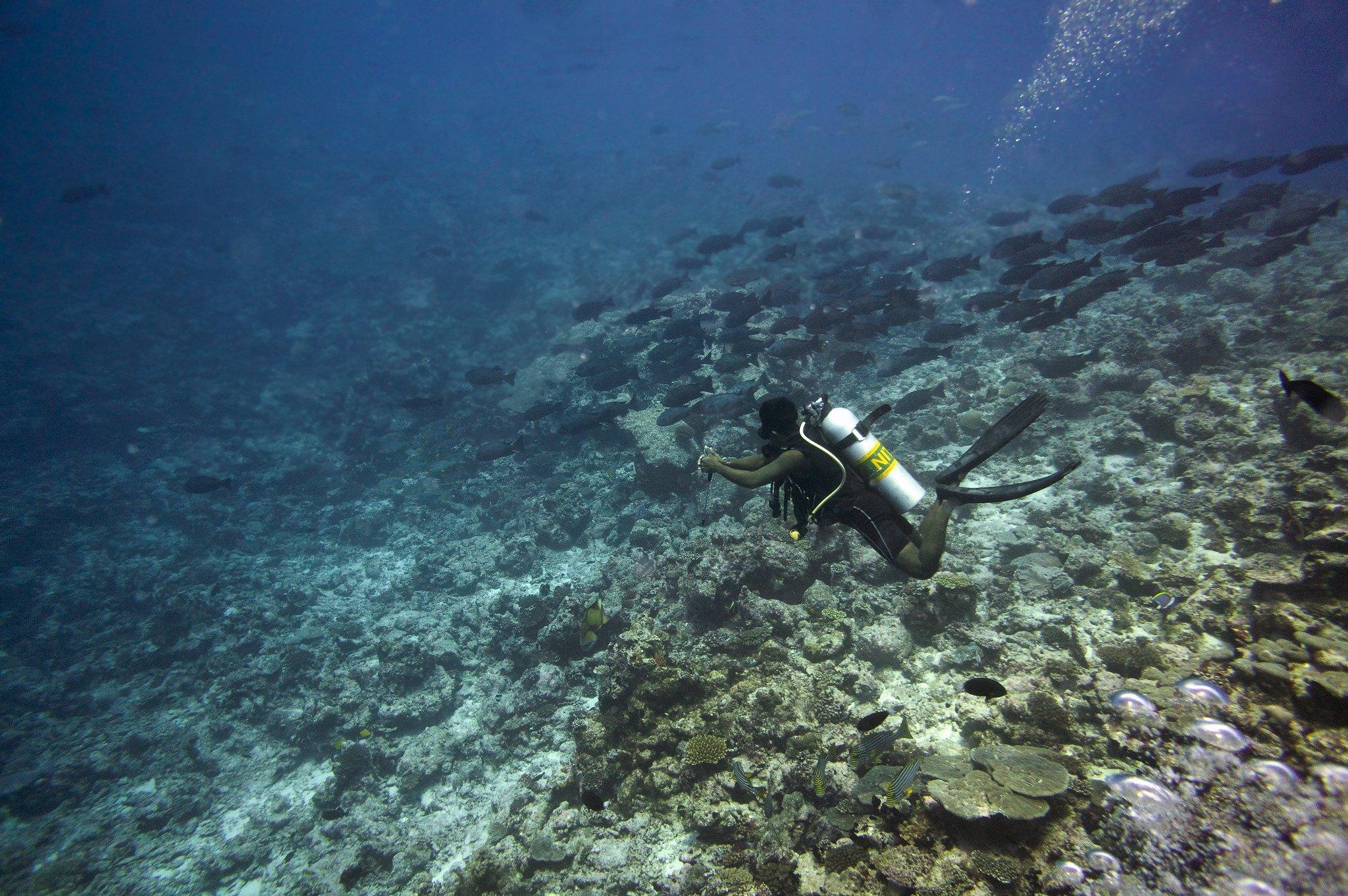 Best Liveaboard Dive Trips in Maldives8