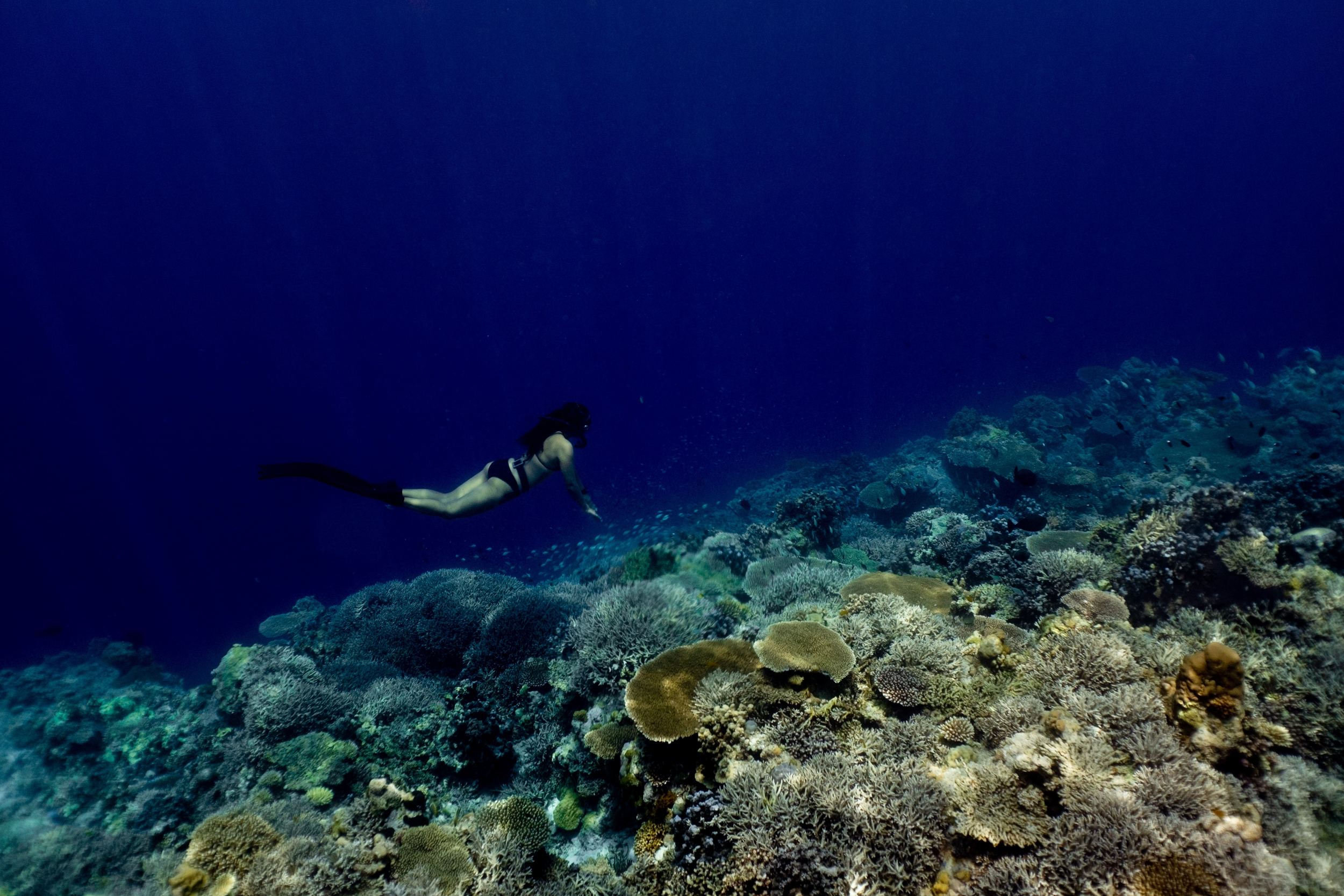 Best Scuba Diving Destinations in the Philippines
