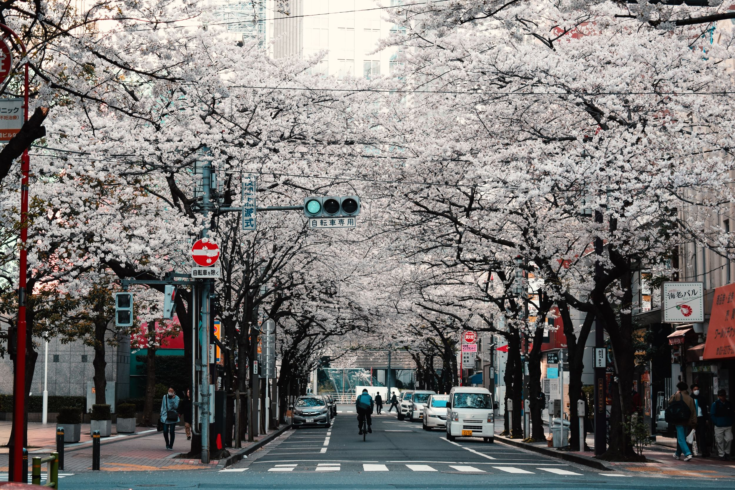 How to Teach English in Japan – The Land of the Rising Sun