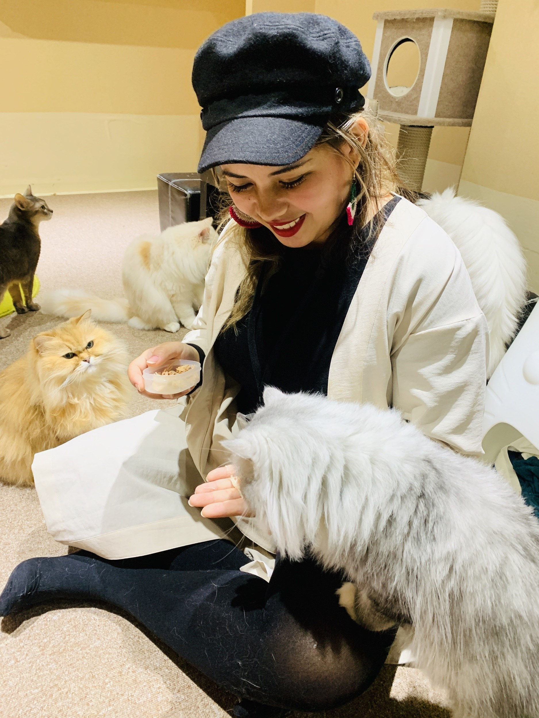Best Cat Cafes in Tokyo, Japan With Rates Included