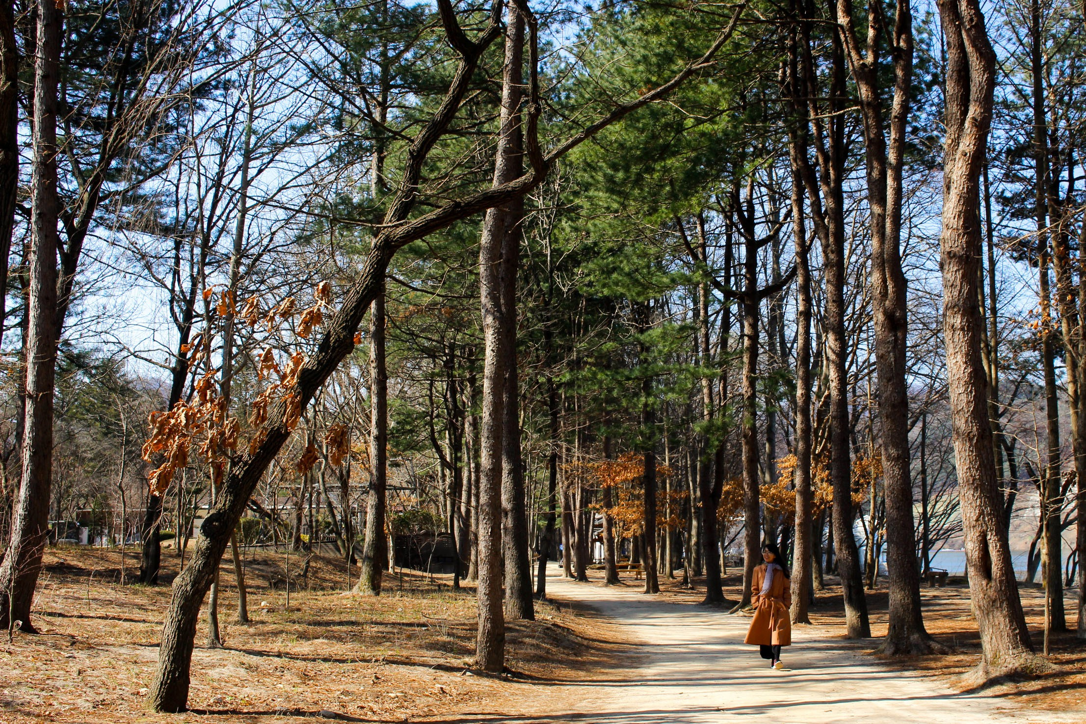 Travel Guide to Nami Island, South Korea How to Go & What to Do