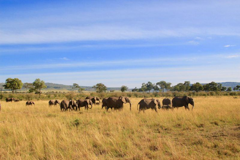 Encounter Gorilla and Wildlife Safari in East Africa4