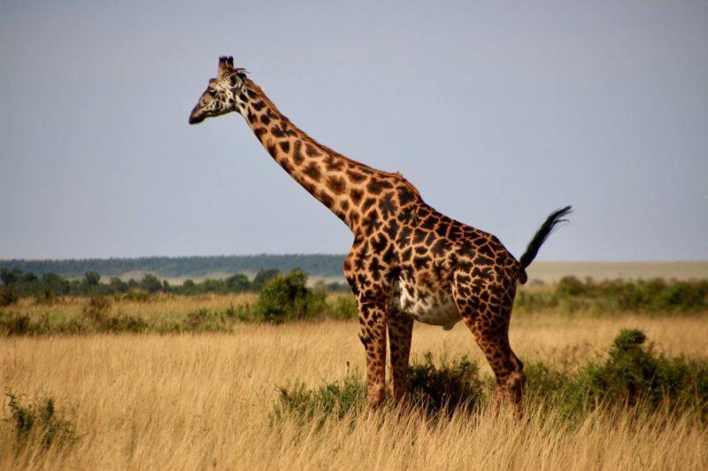 Encounter Gorilla and Wildlife Safari in East Africa5