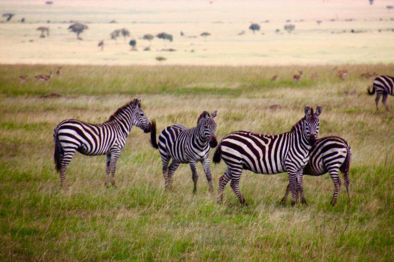 Encounter Gorilla and Wildlife Safari in East Africa6