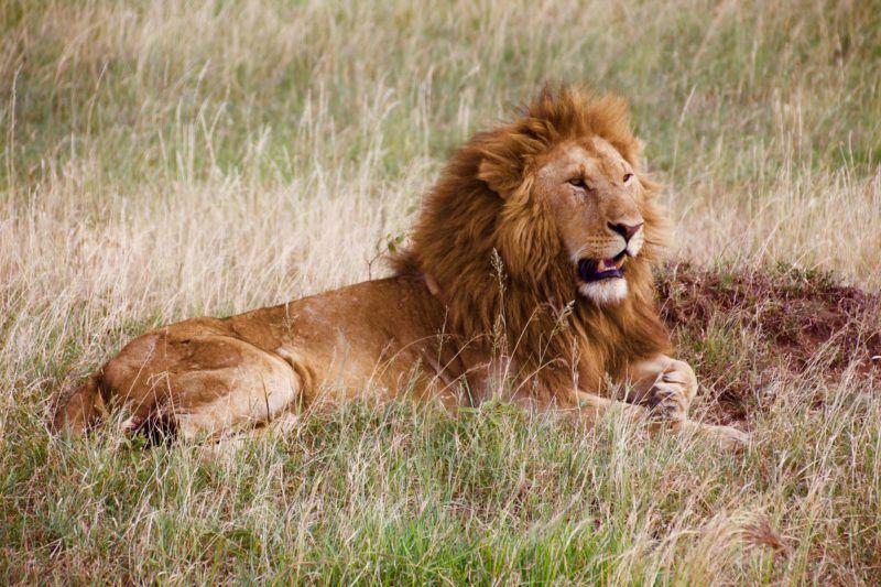 Encounter Gorilla and Wildlife Safari in East Africa7