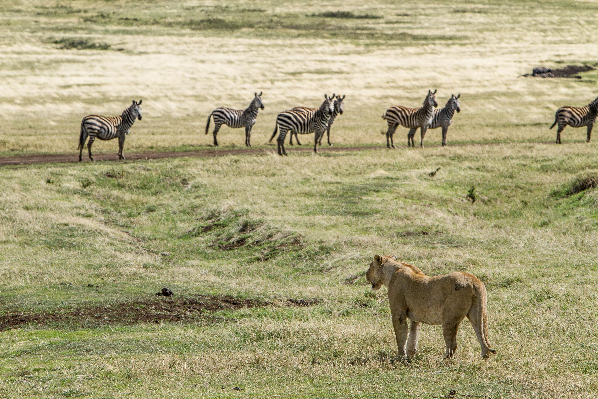 Encounter Gorilla and Wildlife Safari in East Africa