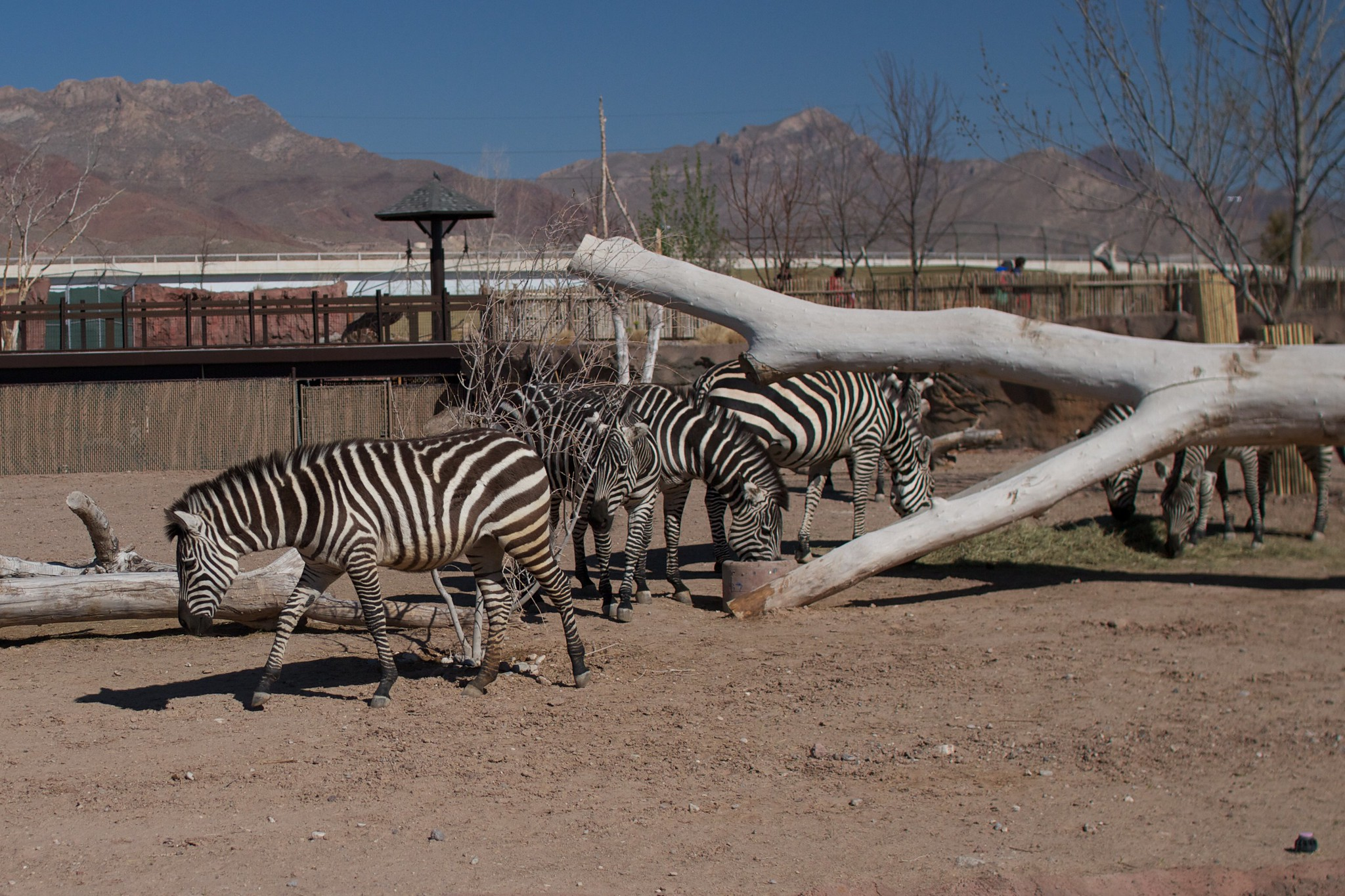 Things To Do in El Paso, Texas