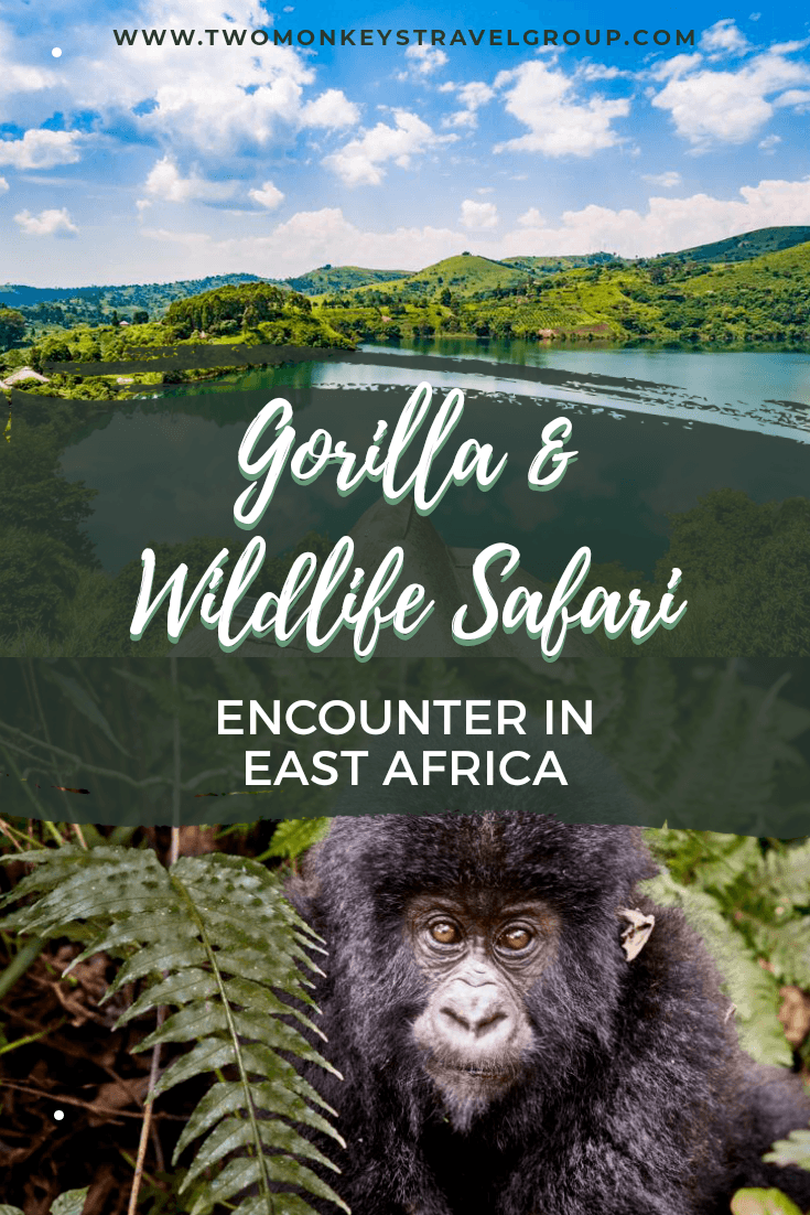 Your Dream Africa Trip Encounter Gorilla and Wildlife Safari in East Africa