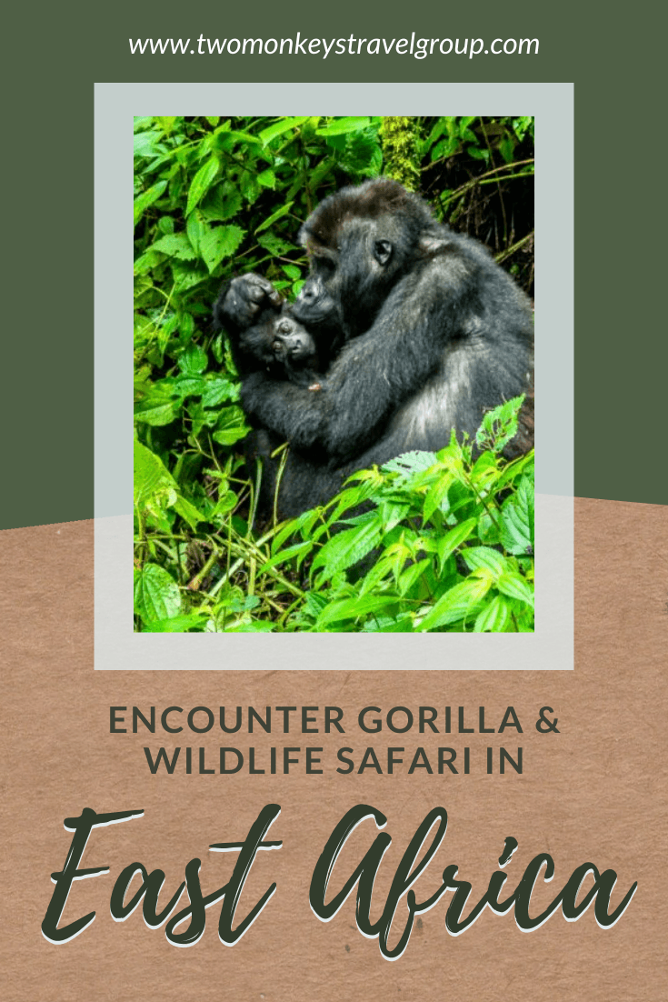 Your Dream Africa Trip - Encounter Gorilla and Wildlife Safari in East Africa