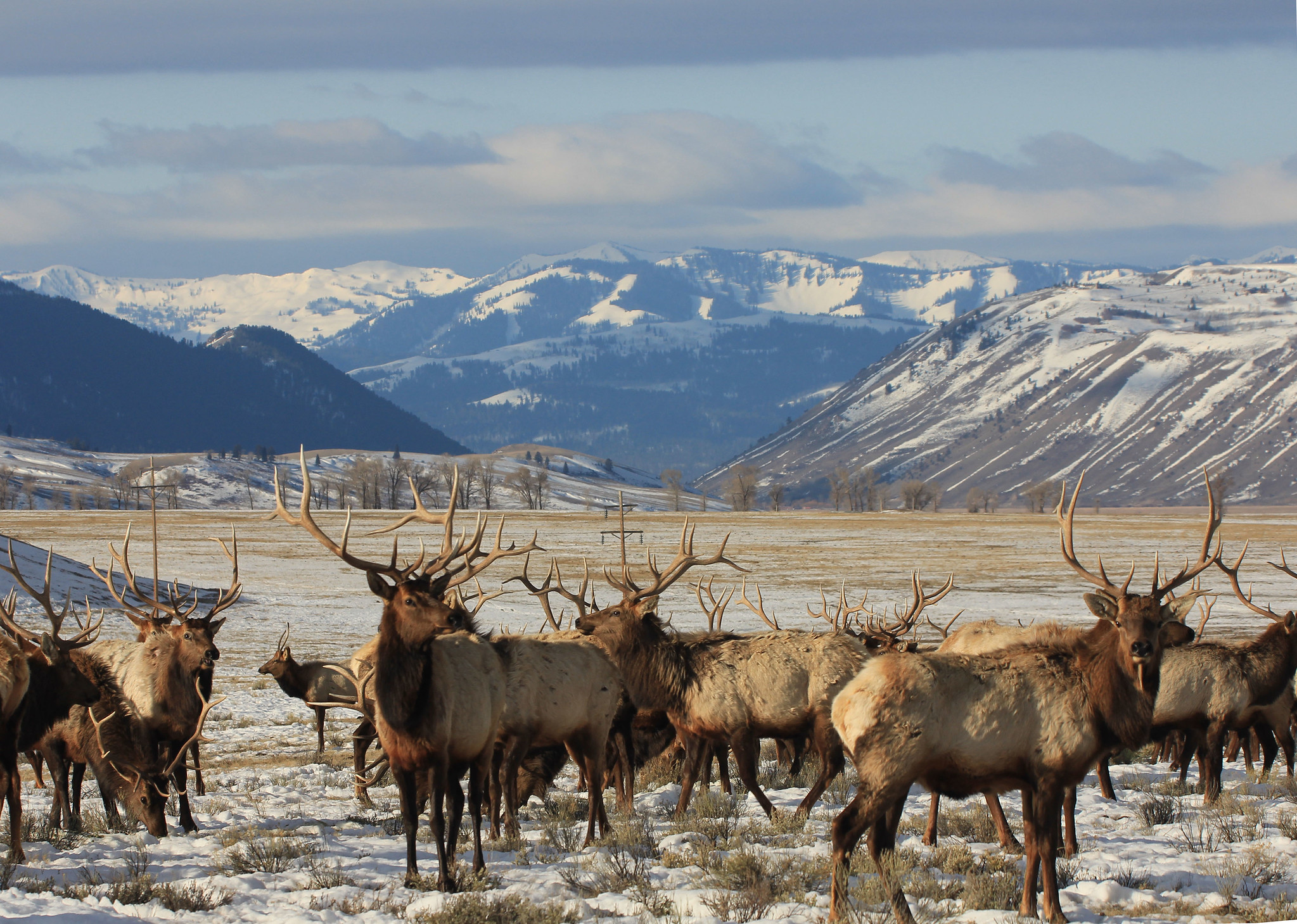 15 Things to do in Jackson Hole, Wyoming