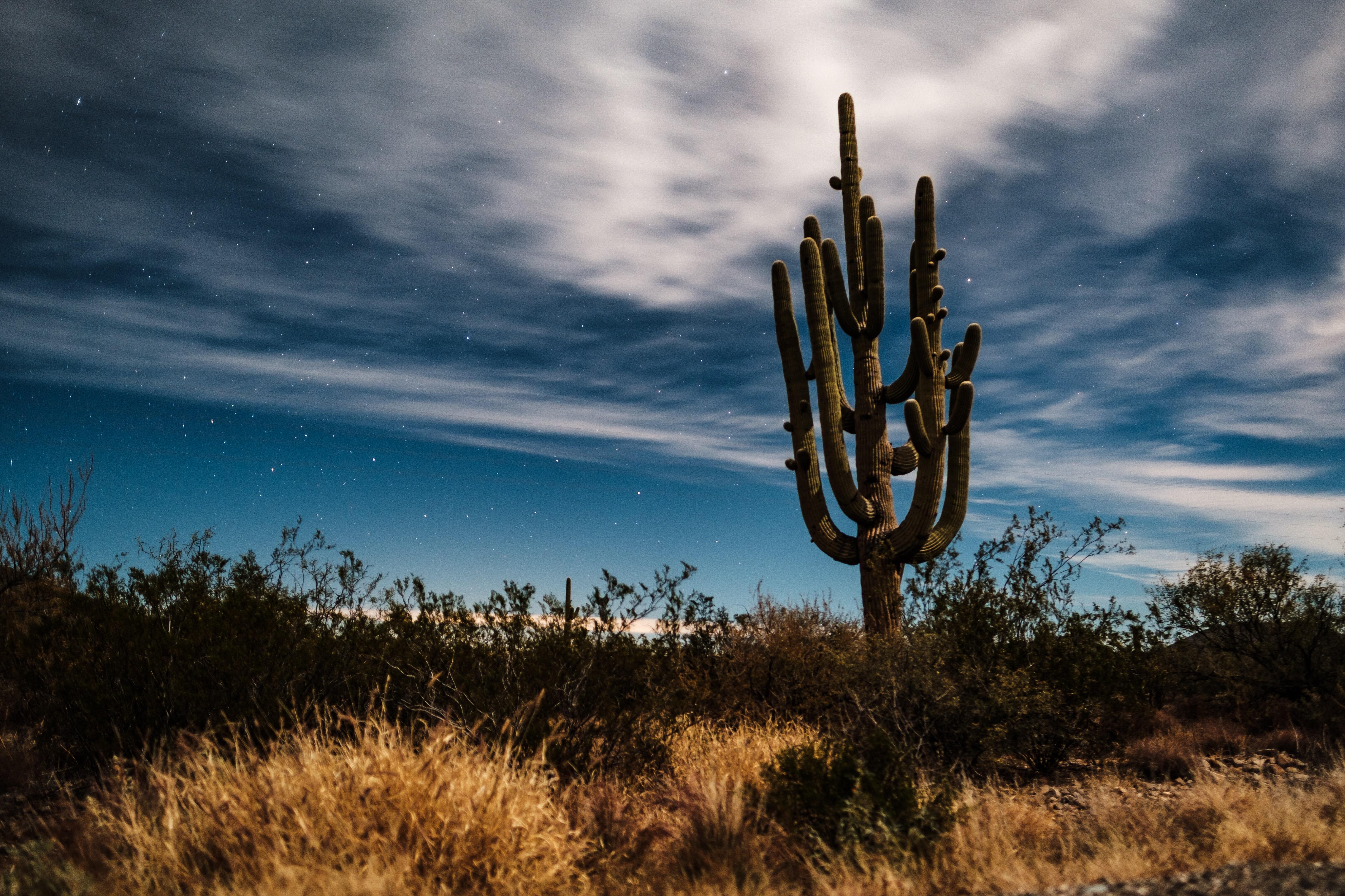 15 Things to do in Tucson, Arizona